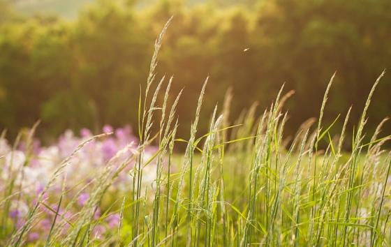 field_grass.jpg